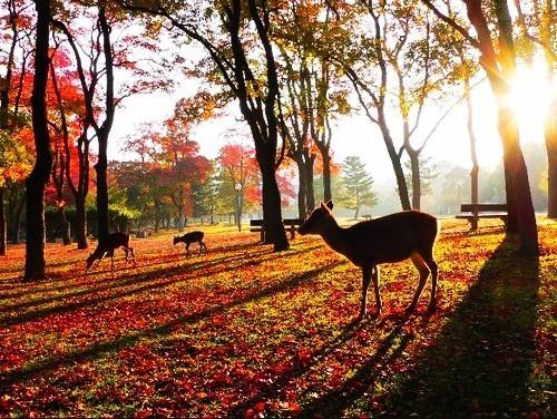 日本红叶季,你最亟需Get的是这两类赏枫线路!