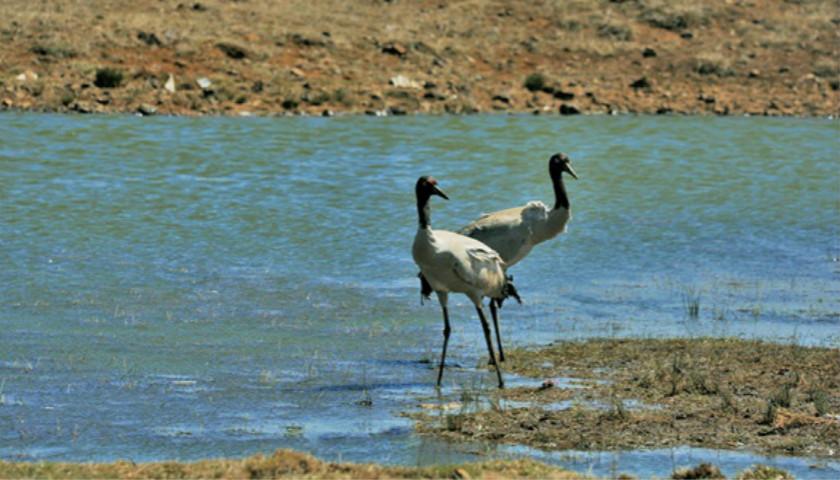 中国已建2740处自然保护区 约占陆地国土面积