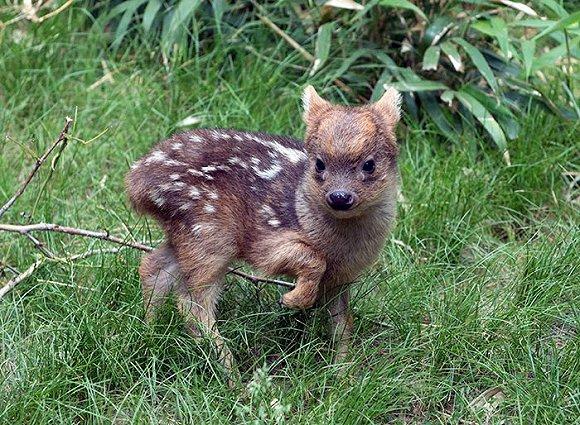 动物小宝宝实在是太萌了