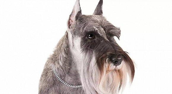 4,宠物照片 随便用手机拍一张白底的宠物照片,打印出来带着就可以了.