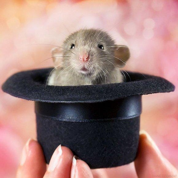 仓鼠才是最可爱哒