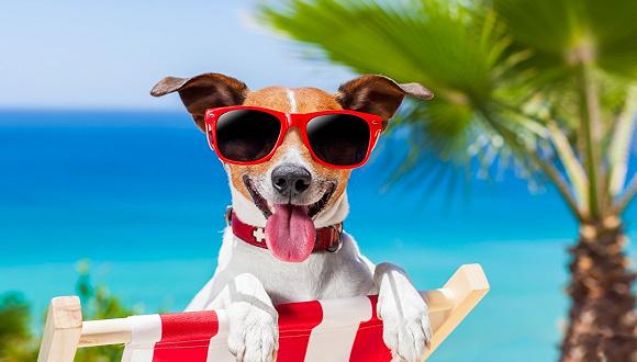 """墨西哥推出宠物常旅客计划 一次手续半年""""免签"""""""
