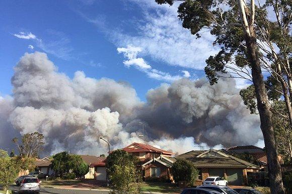人為縱火?悉尼郊外2430公頃叢林過火 500消防員上陣
