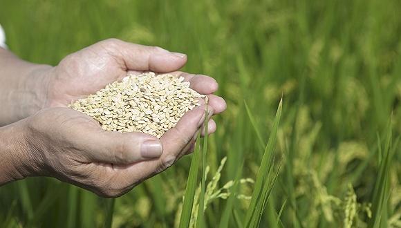 抓粮食生产不那么重要了? 人民日报刊文:追求丰收始终不能改