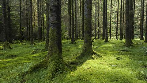 直通部委| 中國人工林規模居世界首位 10起統計違法案處分151人含9名廳級