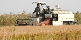 2018年中國糧食總產量減產74億斤,國家統計局:仍屬豐收年景