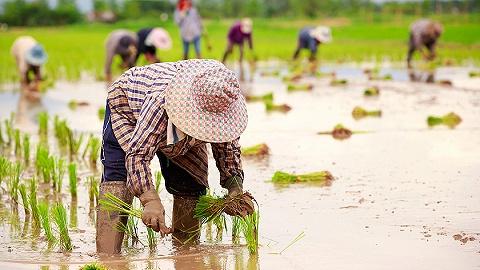 代表委员谈村庄复兴保持农业乡村优先生长