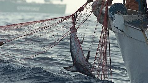 多部分启动结合法律攻击长江口水域不法捕捞