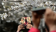 地方新闻精选|男子?#20260;?#31359;和服进武大赏樱与保安冲突,校方:17年前就有规定