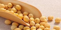 我?#19988;?#37027;么多大豆究竟做什么?