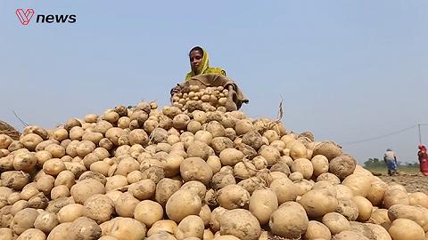 种土豆都会侵权?百事公司起诉印度四农民