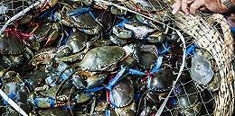 """【深度】一年卖出3亿海鲜:直播小镇与它背后的""""卖水人"""""""