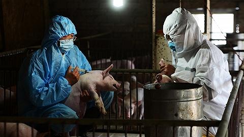 """谁是""""非洲猪瘟疫苗发明人""""许启太:主攻中药,还曾参与研制""""避孕疫苗"""""""
