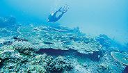 潜水教练才是鱼炮目标?马来西亚警方:中国旅客或连带死于存心谋杀