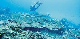 潜水教练才是鱼炮目标?马来西亚警方:中国游客或连带死于蓄意谋杀