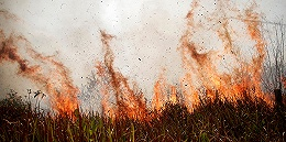 """亚马孙雨林火势不减巴西数万军人奔赴前线,总统看演出""""调节情绪"""""""