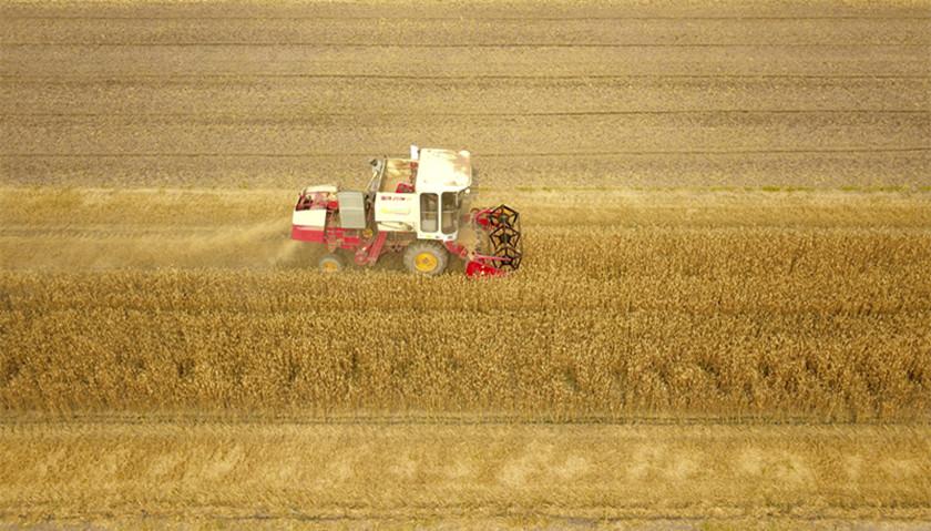 《中国共产党农村工作条例》:加强党对农村经济建设的领导|界面新闻·中国