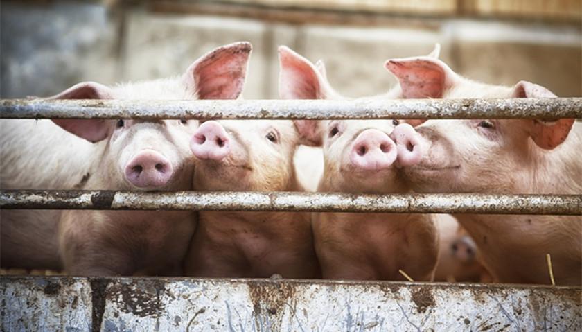 直通部委 商务部:上周猪肉批发价为每公斤34.59元两高:高考等4类考试作弊属犯罪 界面新闻·中国