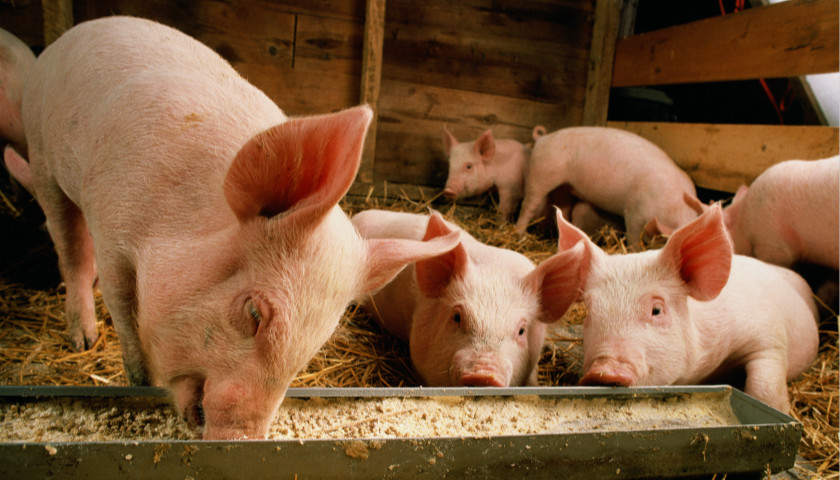 <b>中央财政加码支持生猪供应,两部门:明年底前新建猪场等最高补助500万元 界面新闻·中国</b>