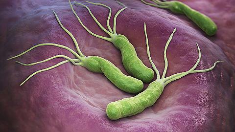 幽门螺旋杆菌新克星发明人:研究成果已经完成动物实验安全性的评价