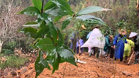 农夫山泉武夷山事件进展:施工人员已撤离,被毁便道正恢复植被