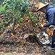 農夫山泉武夷山事件進展:國家公園開挖路段被種上楠木