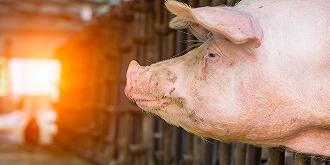 新希望去年净利增近2倍,赚超50亿,拟定增募资40亿大扩生猪养殖
