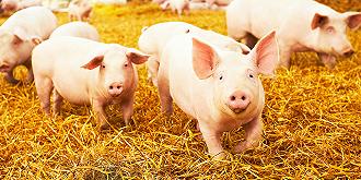 猪价下滑,销量和收入会怎样?这些上市猪企发布3月销售情况