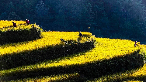 【图集】第四个中国农民丰收节到来,丰收的田野是大地最美画卷