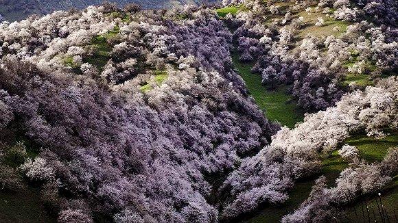 伊犁杏花沟,人间四月最美的春天