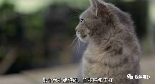 抱头可爱动物图片
