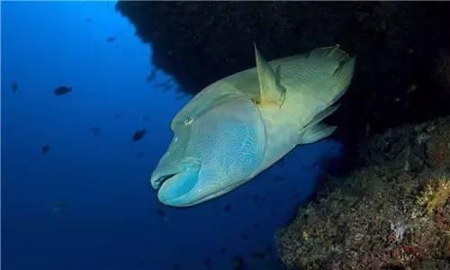 壁纸 动物 海底 海底世界 海洋馆 水族馆 鱼 鱼类 500_300