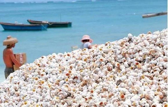 01平方公里的小岛,是西沙群岛渔民的常驻地,岛上常年居住着四十几位