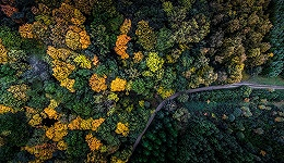 丹麦的森林