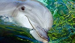 在水族馆与海豚告别:从古代神话图腾,到现代娱乐产品