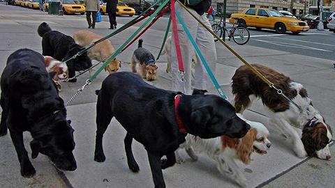 纽约狗狗地图
