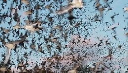 从恶魔到超英:我们与蝙蝠的复杂关系