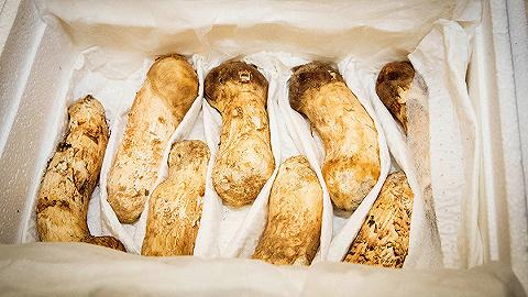 金正恩送给韩国的2吨松茸有多贵?值1000多万人民币