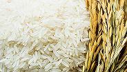 微视频|一碗米饭的味道