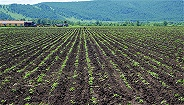 农业农村部:确立第二批24个黑土地保护利用试点县