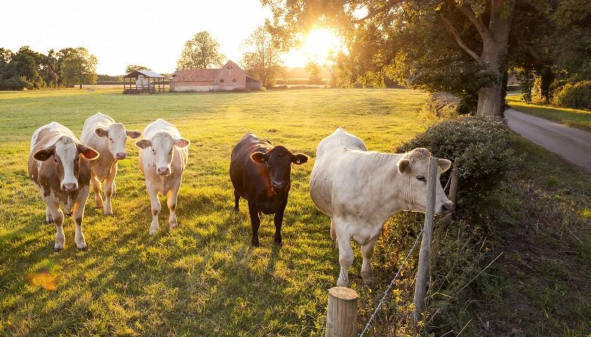 多项业务不赚钱,连续亏损的西部牧业能躲过暂停上市?