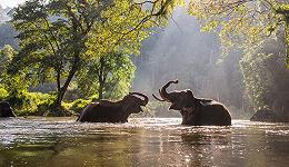 大象乐乐案:动物能否享有一些人类的权利?