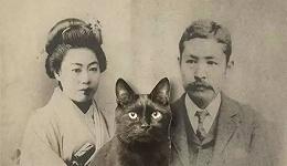 既然这样想进这个家,就随它好了:夏目漱石与猫二三事