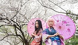 【思想界】武大赏樱冲突:樱花和服是日本侵略符号还是文化交流见证?