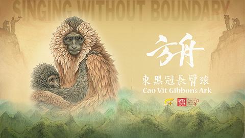 中越边境极度濒危物种东黑冠长臂猿珍稀影像