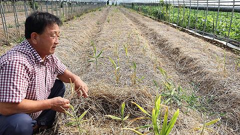韩国去年逾9成新增职位是农民,其中过半人无薪水