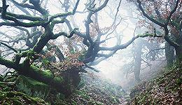 树木对历史来说有何重要意义?