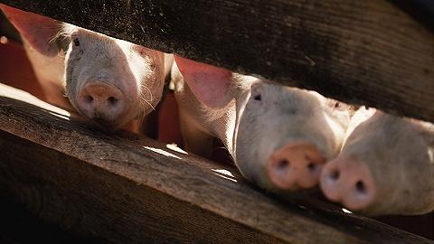 【界面晚报】非洲猪瘟疫情防控取得阶段性成效 中国将提前一年取消金融业外资持股比例限制