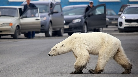 此刻的北极,正在发生这四件怪事