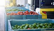 """利奇马致""""蔬菜之乡""""受灾,但对全国菜价影响不大"""